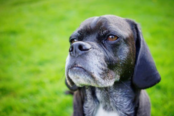 inschrijfformulier honden