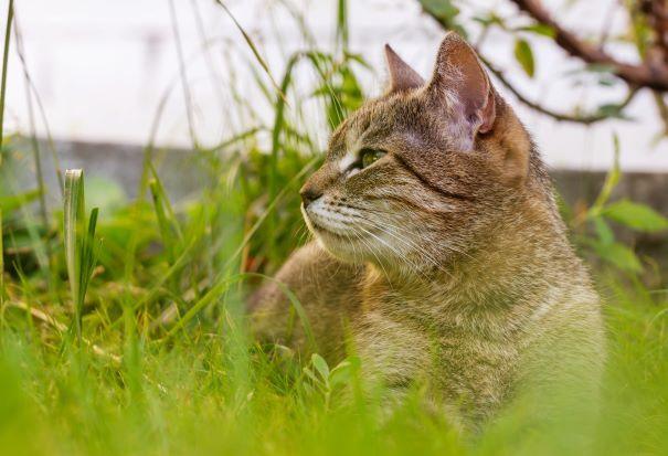 Inschrijfformulier katten